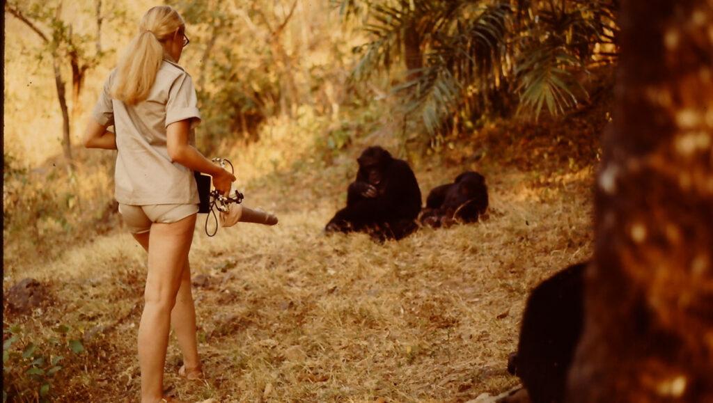 Dr. Hetty van der Rijt tijdens het observeerden van chimpansees in Tanzani